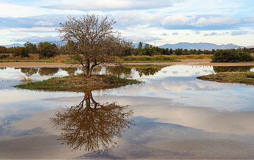 Los humedales del Ampurdán es un rincón natural de excepcional belleza situado en Girona, Costa Brava