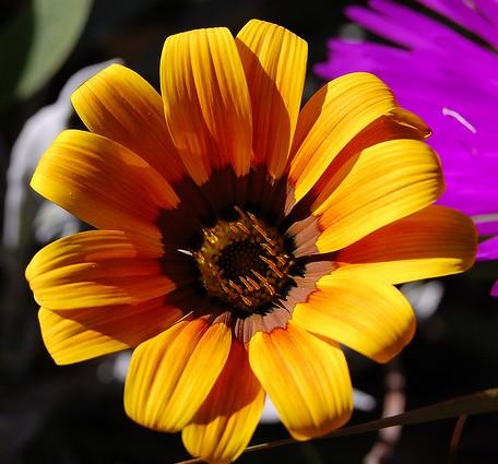 La diversidad de flores y plantas en el Jardín Botánico de Marimurtra es sorprendente