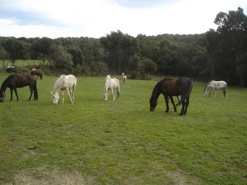En los alrededores de la ermita de Santa Coloma de Fitor se encuentran caballos pastando