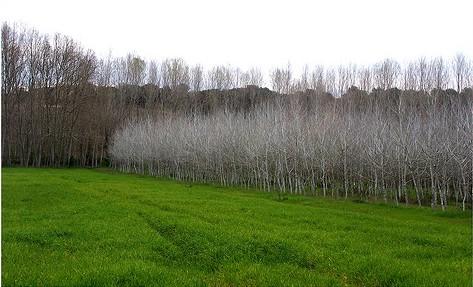 Bosque del Batlle, en Palol de Revardit, lugar de refugio de Sánchez Mazas y sus amigos
