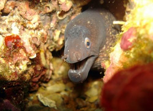 El fondo de la cala de Aiguafreda ofrece una gran variedad de especies marinas.
