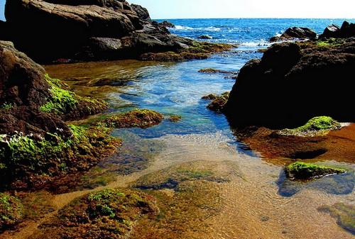 La Cala Sant Francesc ofrece curiosos rincones donde el azul de sus aguas contrasta con la vida vegetal en su orilla