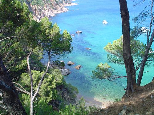 Descenso entre el bosque de pinos hacia Cala Futadera, Tossa de Mar