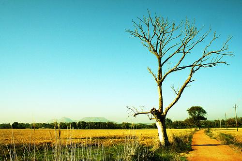 Ruta por los arrozales de Pals, les Basses d'en Coll, Girona, Costa Brava