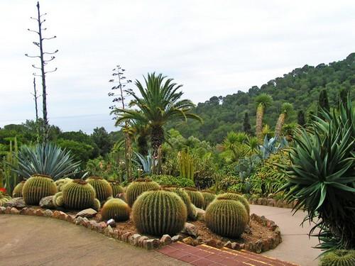 Su colección de cactus es de las más importantes del mundo, por su rica variedad