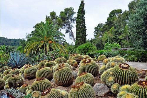 El Jardín Botánico Pinya de Rosa alberga sobre todo especies tropicales