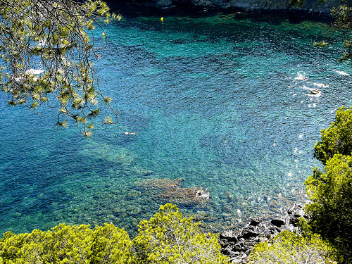 En Cala Rustella los pinos crecen prácticamente a nivel del mar y sus copas llegan a acariciar las aguas limpias y transparente de la cala