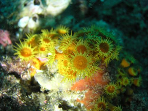 El fondo submarino de Cala Rostella es especialmente apreciado por los amantes del snorkel