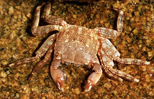 Todo el cabo de Roques Planes tiene una vida submarina muy activa... cuidado con los cangrejos!