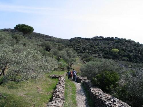 El trayecto hacia el Jonquet transcurre en buena parte por senderos rodeado por vegetación típicamente mediterránea, donde destacan los olivos