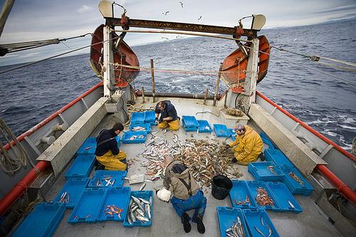 Finalizamos nuestro recorrido hacia las 5 de la tarde en el Puerto de Palamós, cuando llegan las embarcaciones pesqueras tras haber faenado, y contemplamos su valiosa mercancía