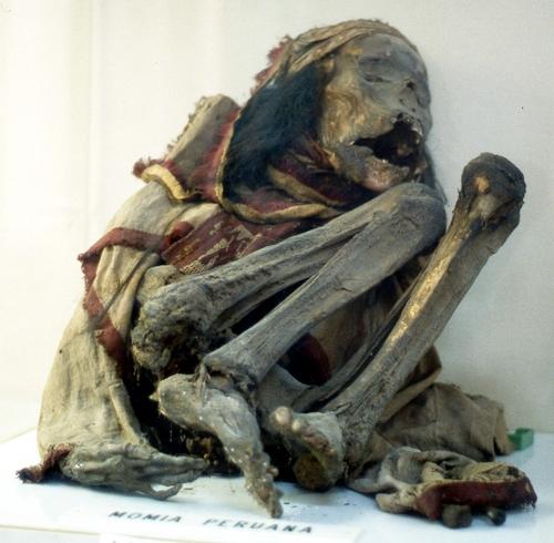 El Museo Darder cuenta con algunas momias humanas expuestas al público, como esta procedente de Perú