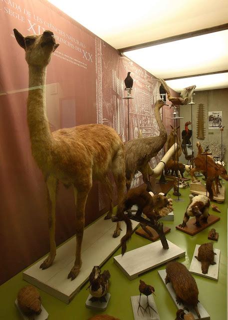 El Museo Darder de Historia Natural, en Banyoles, Girona, Costa Brava, muestra una gran colección de animales disecados