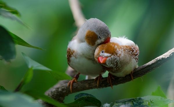 Escenitas como estas, en que estos dos pajaritos se besan y se limpian mutuamente, no son raras de ver en el Butterfly Park Empuriabrava