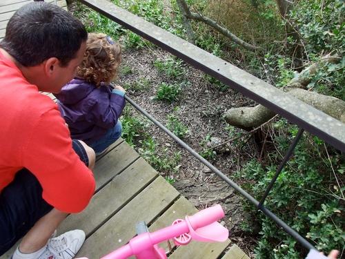 Los niños son los primeros sorprendidos por la presencia tan cercana a las tortugas
