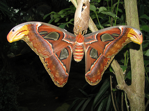 Las formas y colores de las mariposas del Butterfly Park Empuriabrava son realmente curiosos, y difíciles de ver fuera de este ámbito