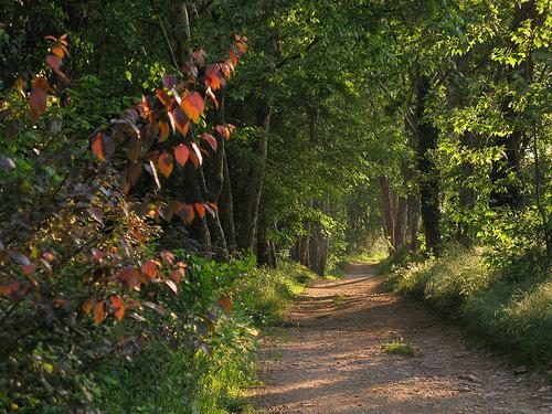 El Valle de San Daniel, a pocos cientos de metros del centro de Girona, está lleno de caminos forestales que nos permiten descubrir la naturaleza