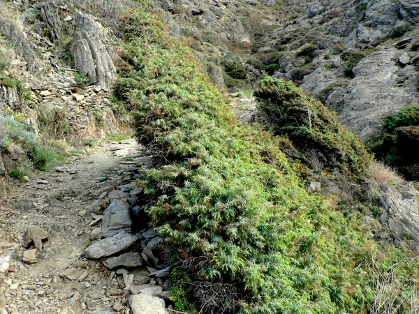 Camino de ronda entre Cala Tamariua, cerca del centro del Port de la Selva, y Cala Fornells