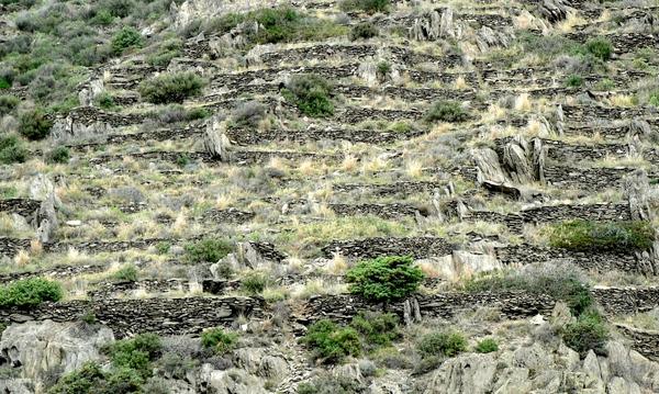 Antiguos muros de piedras, construidos para plantar viñas, son visibles desde el camino de ronda que nos lleva a Cala Fornells, en el Port de la Selva, Cap de Creus, Costa Brava