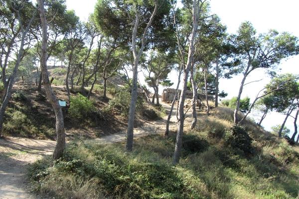 Por el camino de ronda que nos lleva desde la Playa de es Castell hasta la punta donde se encuentra el poblado ibérico hay un desvío peligroso que desciende hasta Cala Sa Corbatera. No es recomendable bajarlo.