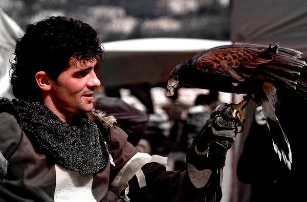 Durante el fin de semana en que transcurre la Feria Medieval de Calonge se llevan a cabo diversas exhibiciones de cetrería