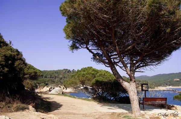 Mirador sobre el camino de ronda que pasa junto a la Pineda d'en Gori, con vista a Cala s'Alguer, Cala es Castell y las Islas Medas