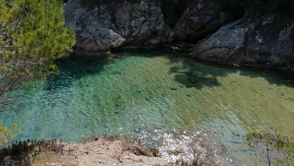 La calidad de las aguas de Cala Morisca es extraordinaria. Aquí podemos ver las copas de los pinos junto al mar reflejándose en las aguas de la cala