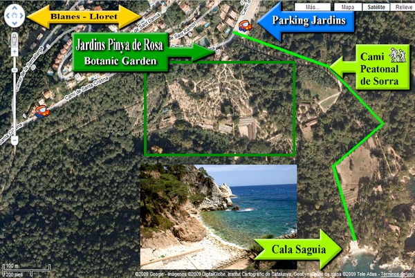 Llegar hasta Cala S'Agüia no es especialmente complicado, podemos disfrutar de un agradable paseo de 700 mts. hasta llegar a ella desde el parking del Jardín Botánico Pinya de Rosa