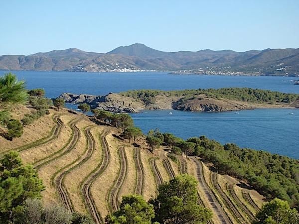 Sobre las montañas a la espalda de la Cala Port d'en Joan, también en Colera y orientada a la bahía y al viento de levante, se cultiva la uva del vino Finca Garbet, del Grupo Castell de Peralada, denominación de origen Ampurdán. La isla del fondo es Illa Grossa.