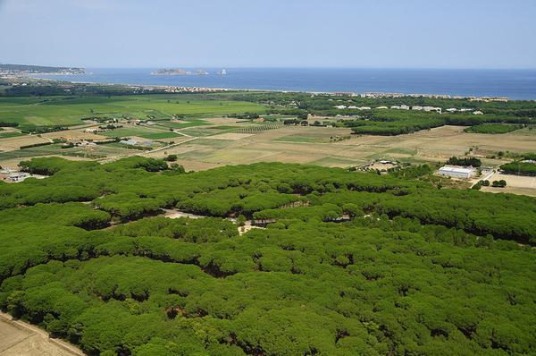 El Bosque de los Imposibles se encuentra en la zona de los Masos de Pals (cerca del centro del pueblo de Pals), y a pocos centenares de metros del mar.