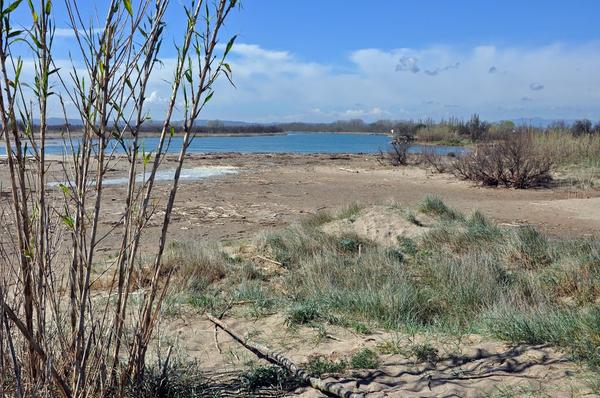 Playa Can Comes se encuentra sobre una región virgen de tipo dunar y lacunar, con vegetación autóctona propia de un hábitat soleado y a veces seco
