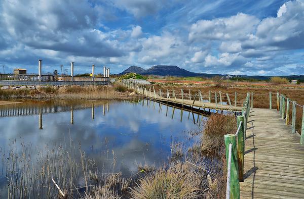 Uno de los grandes atractivos de la Playa Griells es la zona lagunar formada por el Río Ter Vell, muy rica en vegetación y aves autóctonas, y por la que se puede pasear