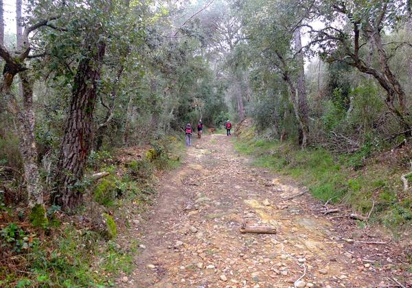 Comenzamos nuestra subida a la cima del Quermany Gros, donde se encuentra nuestro mirador, a través del camino que cruza el bosque de pinos