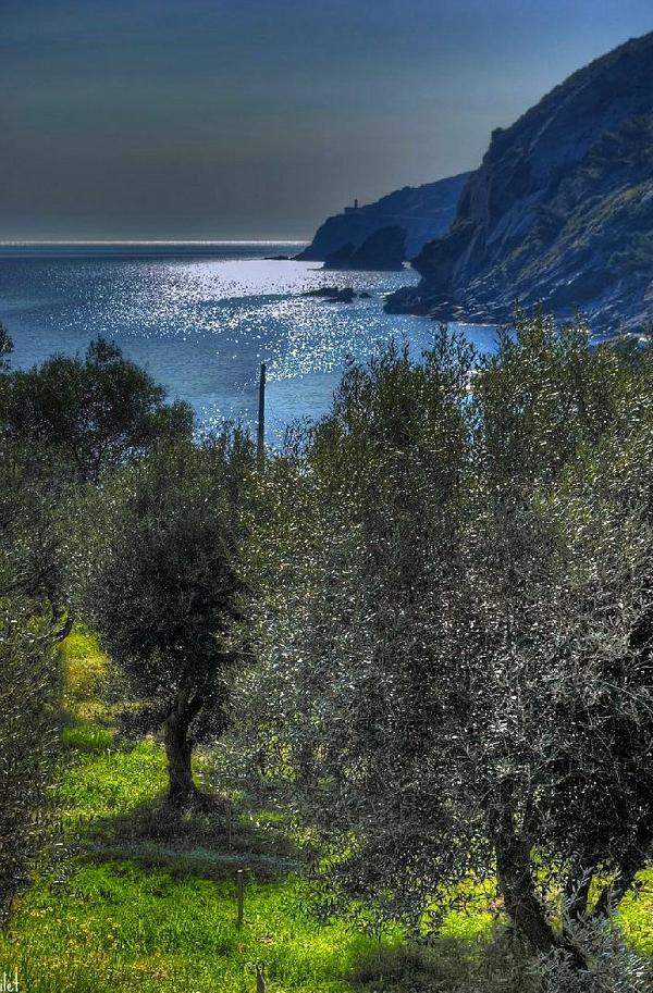 Frente a Playa Sa Conca, en Cadaqués, se encuentra el Olivar de Sa Conca, un pequeño jardín de olivos que en verano es uno de los escenarios del Festival Internacional de Música de Cadaqués