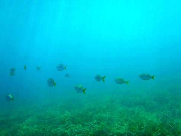 El fondo submarino de Cala Sa Sabolla es de una gran belleza, y sus aguas son limpísimas, como todas las que rodean Cadaqués