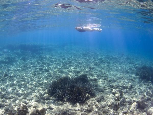Es un placer nadar por las orillas de la Costa Brava sobre un carril específico para bañistas. Las aguas limpias y cristalinas de todas las playas del catálogo nos permitirán disfrutar del fondo submarino