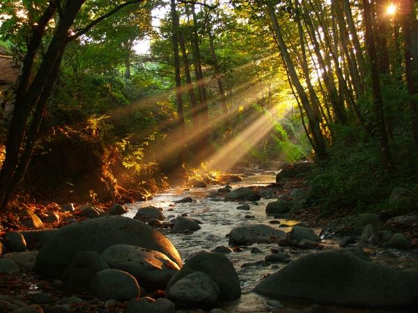 Arbúcies es un pueblo medieval en pleno bosque, aunque a pocos kilómetros del mar, por ejemplo de Tossa. Esta irrigado por diversos cursos fluviales y es un lugar muy tranquilo, perfecto para quienes deseen disfrutar de un ambiente de montaña a pocos kilómetros del mar