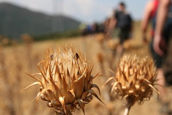 La Ruta Walter Benjamin, que atraviesa las montañas de los Pirineos que se encuentran junto al mar, nos permite conocer una vegetación autóctona que a menudo debe enfrentarse a las difíciles circunstancias que impone el feroz viento de Tramuntana