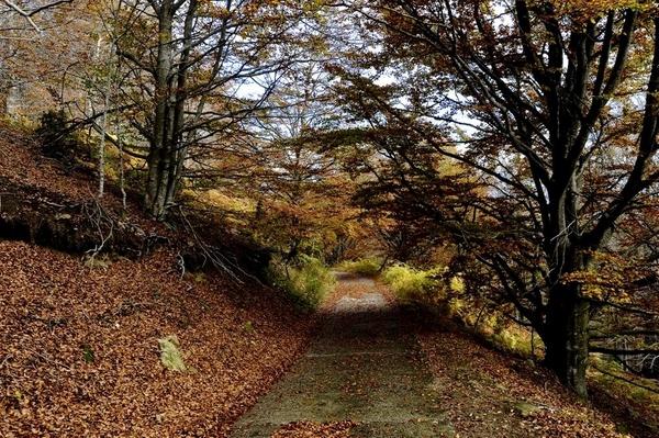 Este recorrido por las Salines, entre el centro del pueblo de Maçanet de Cabrenys y el Santuario, es una experiencia natural única que nos permite pasar de una zona mediterránea de pinos verdes a otra zona de vegetación casi atlántica donde predominan los hayedos. Y todo ellos en pocos kilómetros.